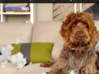 Cute Dog Video - Nest